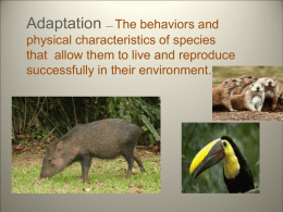 ADAPTATIONS - Petal School District