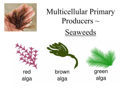 Multicellular Primary - Broadneck High School