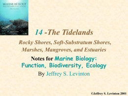 14 -The Tidelands