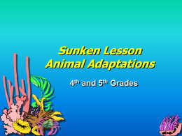 Sunken Lesson Animal Adaptations