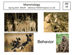 MAMMALOGY AS A SCIENCE