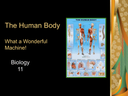 The Human Body What a Wonderful Machine!
