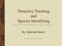Detective Tracking and Species Identifying (we hope!!)