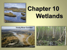 Wetlands Notes part 1
