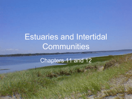 Estuaries and Intertidal zones