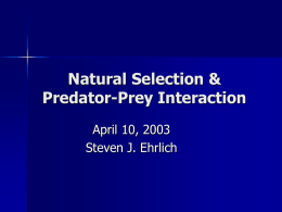 Natural Selection & Predator