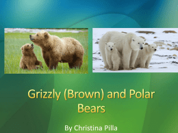 Grizzly (Brown) and Polar Bears - Wildlife Ecology and Conservation