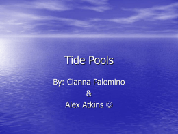 Tide Pools - RamboStudentPage