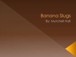 Banana Slugs - MsRotchfordsClass