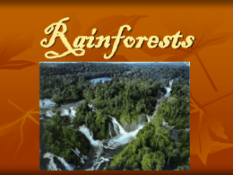 Rainforests - Ms Sheehan`s Website