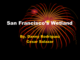 San Francisco`s Wetland