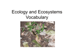 Ecology and Ecosystems Vocabulary