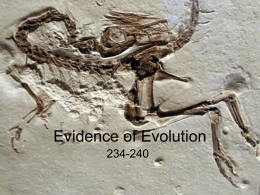 evidence of evolution 2014