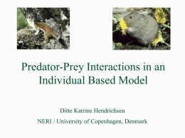 Predator Prey Interactions in an Individual Based Model