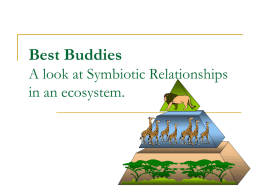Eco-Relationships