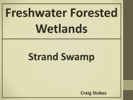What is a Strand Swamp?