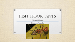 FISH HOOK ANT
