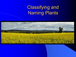 Classifying and Naming Plants