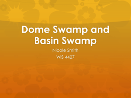Dome Swamp and Basin Swamp