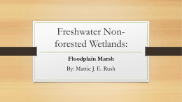 Freshwater Non-forested Wetlands