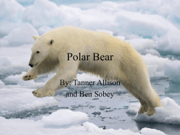 polar_bearx
