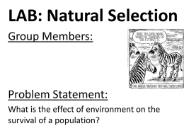 APES Natural Selection Lab Report Formatx