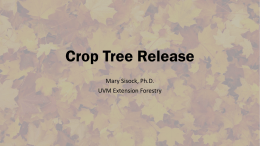 Crop Tree Release - Vermont Family Forests