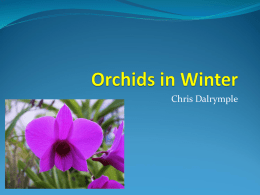 Orchids in Winter