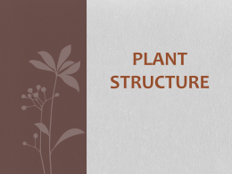 Plant Structure Notes
