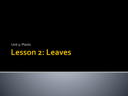 Lesson 2: Leaves - Halton District School Board