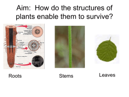 How do the structures of plants enable them to survive?