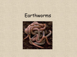 Earthworms - Primary Resources