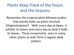 Plants Keep Track of the Hours and the Seasons
