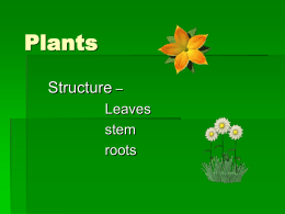 Plants general structure