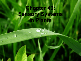 Chapter 40: Sensory Systems in Plants