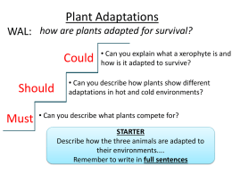 B1.14_(&B1.16)_Adaptations_in_Plants