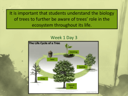 Powerpoint - Tree Life Cycle