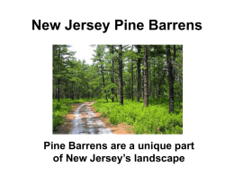 New Jersey Pine Barrens