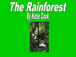 Rainforests PPT - Laconia School District