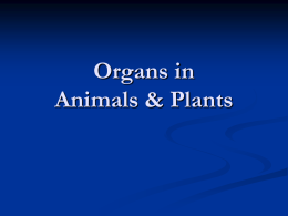 Organs in Animals & Plants WHAT IS AN ORGAN?