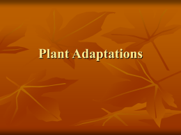 Plant Adaptations Continued