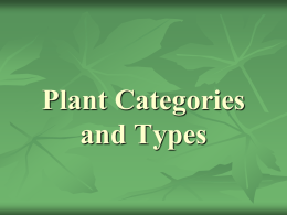 Plant Categories and Types
