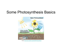 Some Photosyntesis Basics