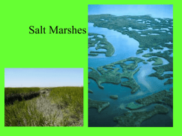 Salt Marshes - Abingdon School Study Site