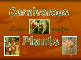 Carnivorous Plants - Primary Grades Class Page