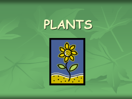 How do Plants Make Food?