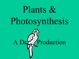 Plants & Photosynthesis - Dr. Annette M. Parrott