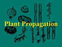 Plant Propagation - Aggie Horticulture