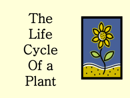 Plant Growth and Development - South Windsor Public Schools