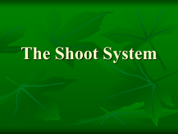 The Shoot System - Agricultural Science